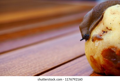 snails cochlea garden macro food
