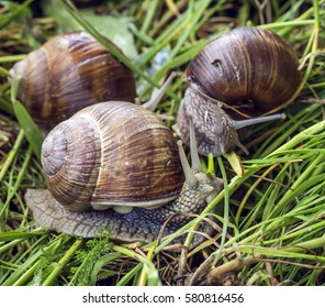 Snails crawling on the moss