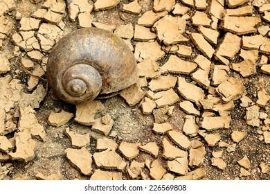 Snails died on dry soil