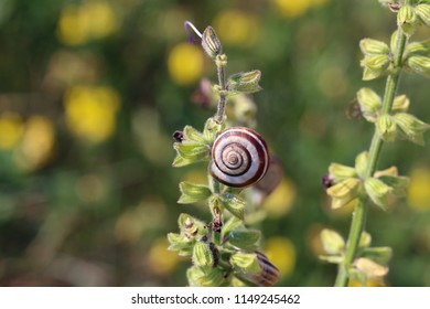 Snails are hiding from the heat in the foliage of plants