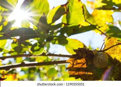 Snail's house on the brown leaf against the blue sky with sunshine at autumn.