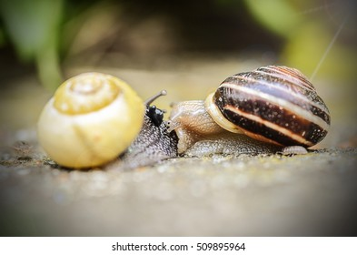 Snails love each other