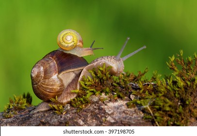 snails, mother and baby in forrest