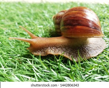 Snails move slowly on artificial grass.
