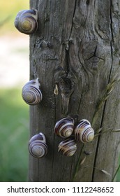 snails on a fencepost