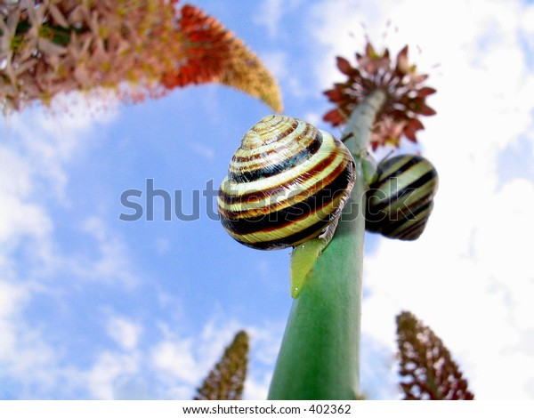 Snails on flower
