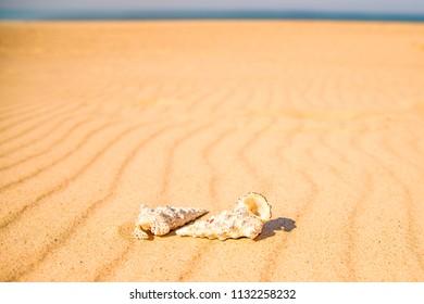 snails on a sandy beach