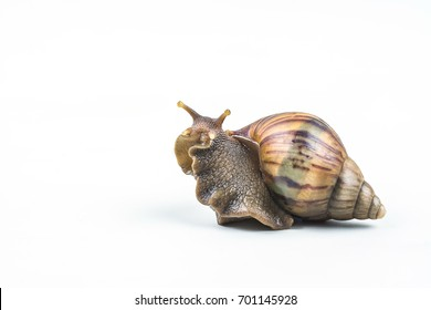 snails on white background