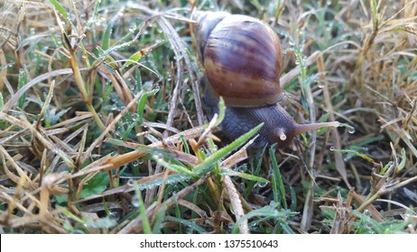 Snails, one of the animals without a spine. Snail meat can cure various diseases such as asthma.