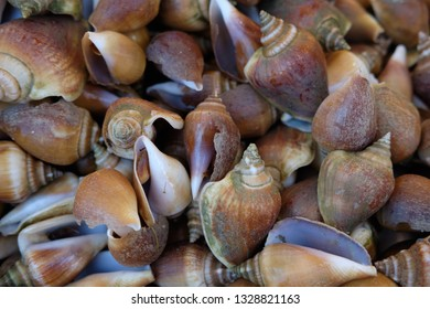 Snails for the preparation of delicacies of Asian cuisine