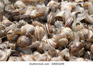 A lot of snails for sale on a market i  Tunisia.