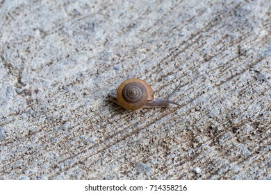 Snails are slowly crawling on concrete to reach the other side of the road.