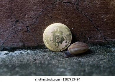 Snails slowly walk through the Bitcoin (BTC) old brown concrete background.
