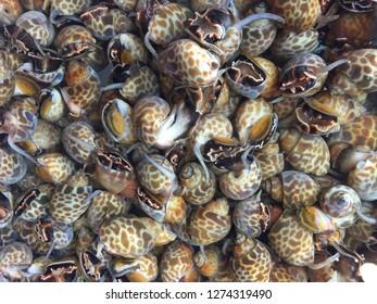 Snails, Thai seafood