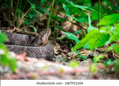 A Snake Coiled on the forest floor among the plants and rocks.