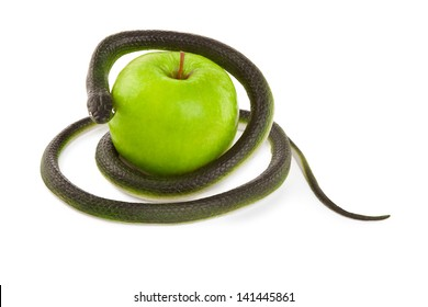 Snake coiling around an apple on a white background