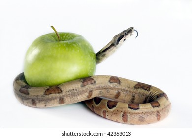 Snake coiling around an apple on a white background.