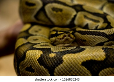 Snake is crawl in the cage, Snake skin.
