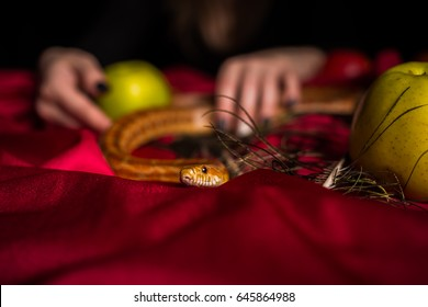 The snake creeps out of the fortune-teller's hands