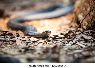 Snake in jungel
