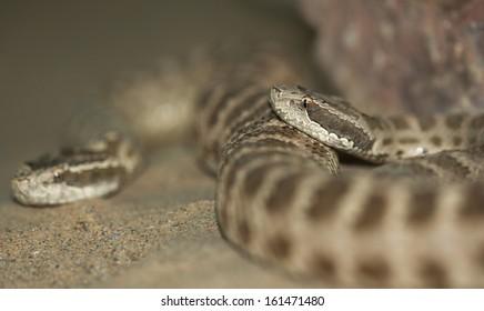 snake. macro