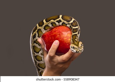 A snake on a red apple, which is held by a woman.