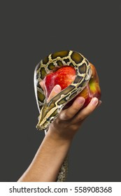 A snake on a red apple, which is held by a woman on a dark background.