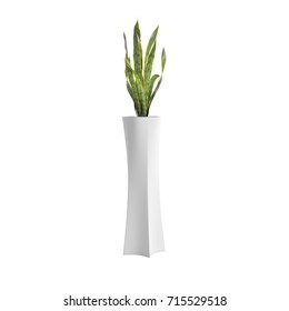 Snake Plant potted plant isolated on white background. 3D Rendering, Illustration.
