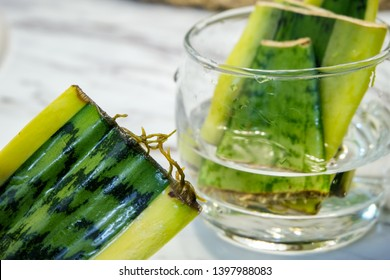 """A """"Snake Plant"""" (Sansevieria Trifasciata) that is being propagated in a glass full of water is close up to show the growth of roots. A few are shown in the background where they sit propagating."""