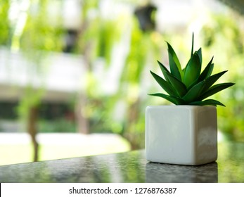 Snake plants in the room . Other name : Sansevieria trifasciata Prain , Mother in law tongue , Viper's bowstring hemp . Can be used indoor or in shade area . can plant in bedroom to make fresh air .