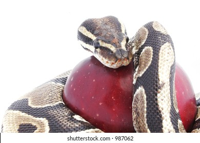 Snake and red apple; temptation concept