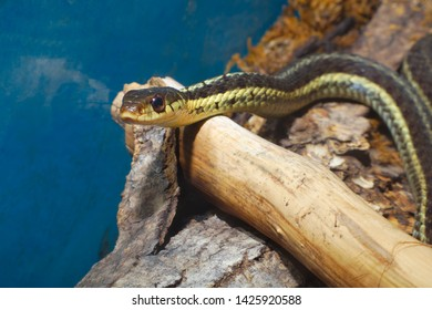 snake reptile animal grass-snake slithering animal predator