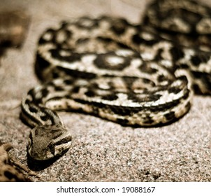snake resting in the hot sand