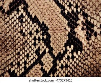 Schlangenhauthintergrund
