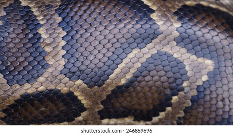 snake skin for background and art