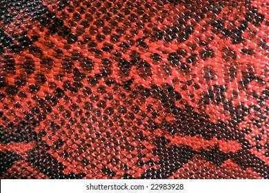 Schlange Hautleder Textur