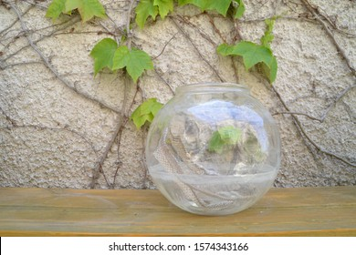 Snake skin in the round glass