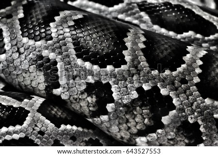 Snake Skinsnake Leather Wallpaper Boa Skin