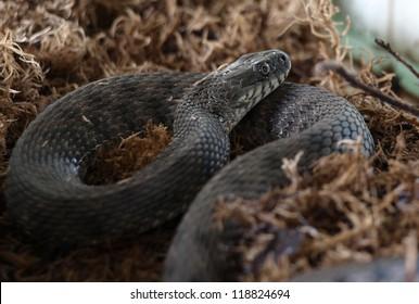 The snake in a terrarium