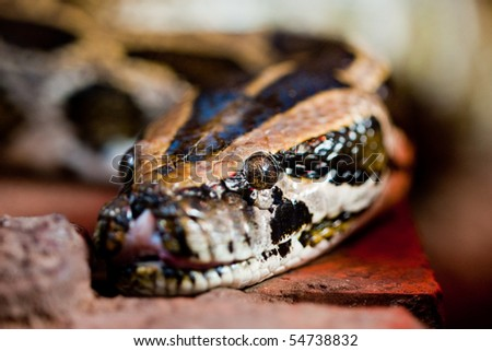 Snake Terrarium Stock Photo Edit Now 54738832 Shutterstock