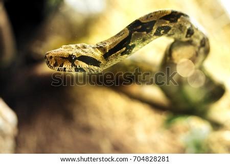 Snake Terrarium Stock Photo Edit Now 704828281 Shutterstock
