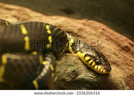 Snake Terrarium Beautiful Stock Photo Edit Now 1036206316