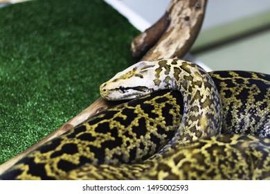 snake in the terrarium close-up