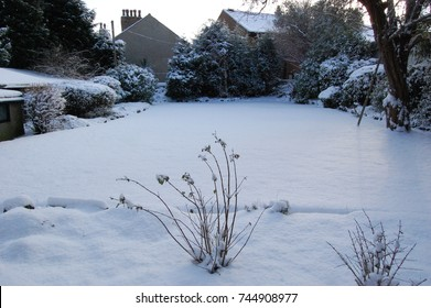 Snap taken of a snowy back garden in England of virgin snow. Bushes, trees, chimney tops visible.