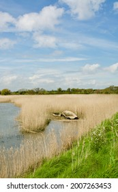 Snape, Suffolk, UK - 11 May, 2021: Two boats lie in the grasses of the R. Alde at Snape Maltings.