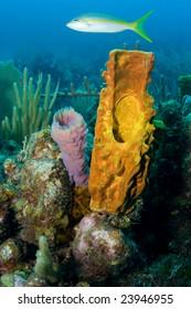 Snapper and Sponge