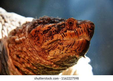 Snapping Turtle Images, Stock Photos & Vectors | Shutterstock