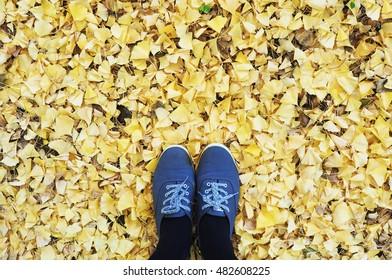 Sneakers on Ginkgo leaves, Kawaguchiko, Japan