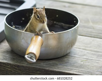 A sneaky chipmunk stealing food out of a camping pot.
