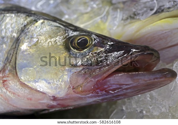 Snook or robalo exposed in fish market for sale to the consumer